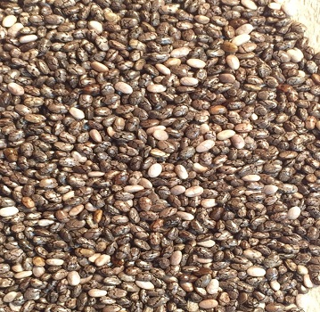 chia-seeds-closeup-1-new